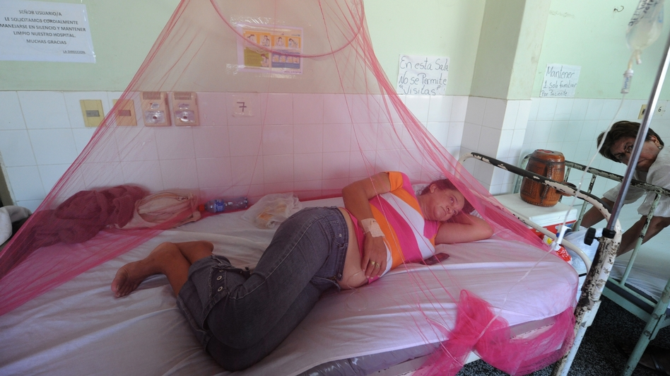 Dengue fever patients are treated in a hospital in Asuncion, Paraguay, in January. (AFP/Getty Images)
