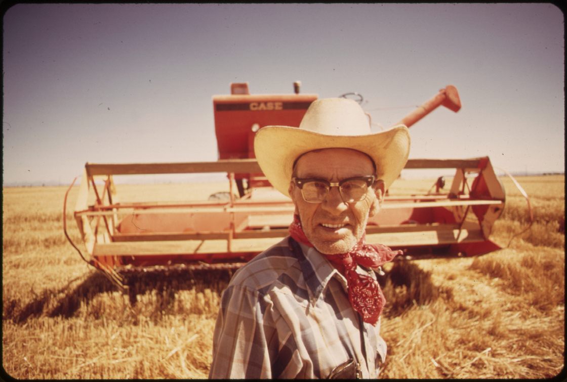 Harvesting wheat in the Palo Verde Valley, Calif., May 1972.
