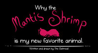 The Oatmeal: Why the Mantis Shrimp is my new favorite animal.