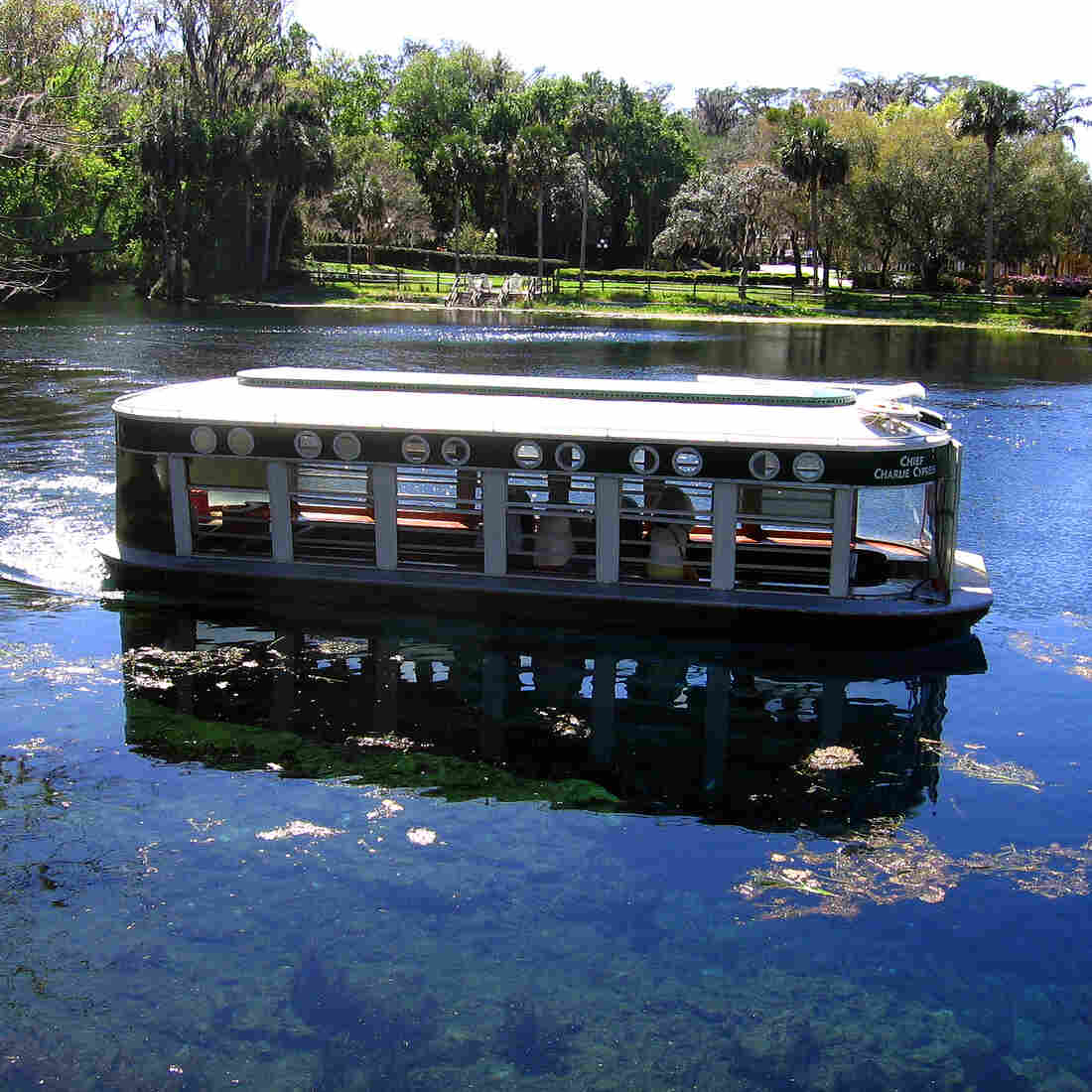Now Endangered, Florida's Silver Springs Once Lured Tourists
