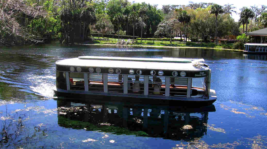 A glass-bottomed boat glides along water in Silver Springs, Fla. The springs, once a major tourist destination, have declined both in volume and in water quality.