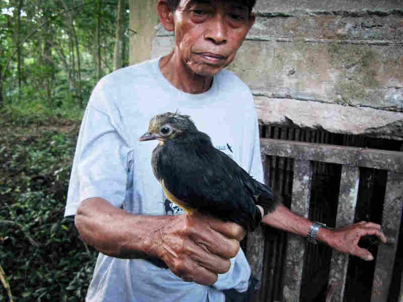 Poacher-turned-conservationist Karamoy Maramis, who works at Bogani Nani Wartabone National Park in Sulawesi, holds a maleo, a bird that exists in nature only on the Indonesian island.
