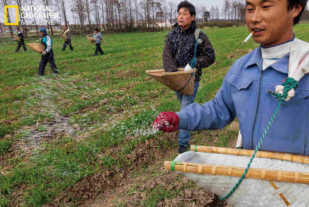 Workers at a cooperative farm near Shanghai scatter fertilizer across fields of winter wheat. Image from the May issue of National Geographic magazine.