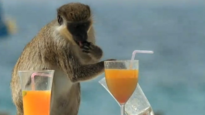Monkeys, Mai Tais And Us