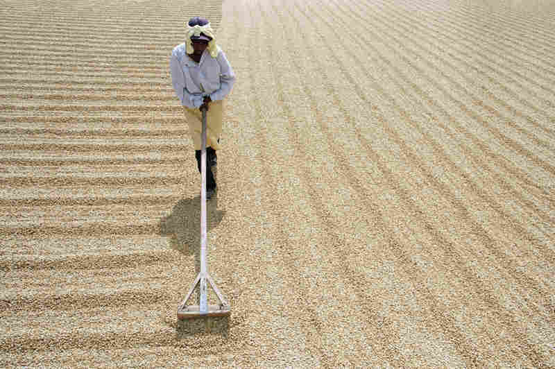 A woman rakes coffee beans that are drying at a coffee plant in Matagalpa, Nicaragua. Coffee is the country's top export.