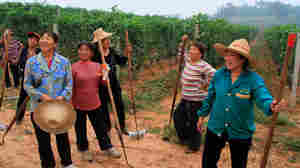 Workers in a Chinese vineyard pause for a break in the new documentary Red Obsession.