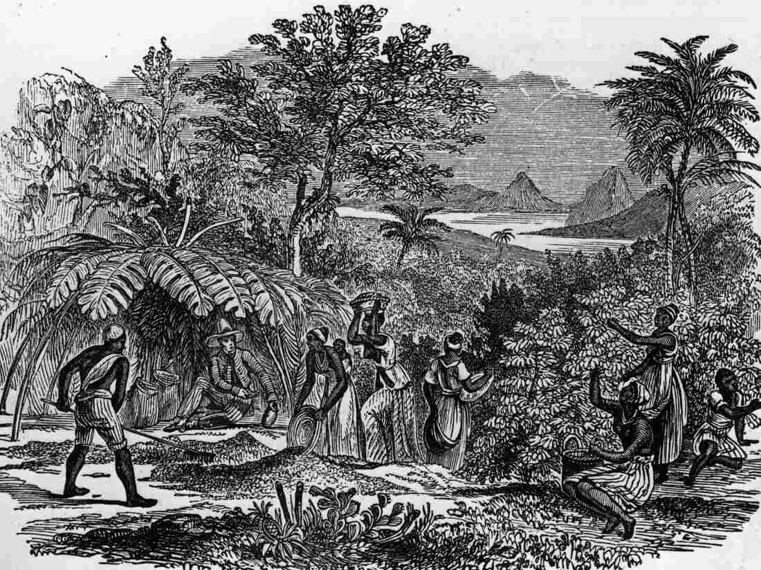 An overseer sits in the shade while workers collect coffee beans on a Brazilian plantation, circa 1750.