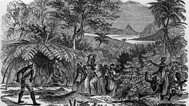 An overseer sits in the shade while workers collect coffee beans on a Brazilian plantation, circa 1750. (Getty Images)