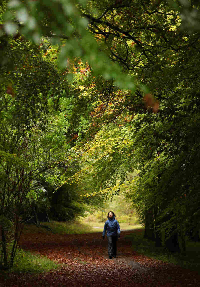 A woman walks along a path lined with deciduous trees in Wendover Woods on October 11, 2009 in Buckinghamshire, England.