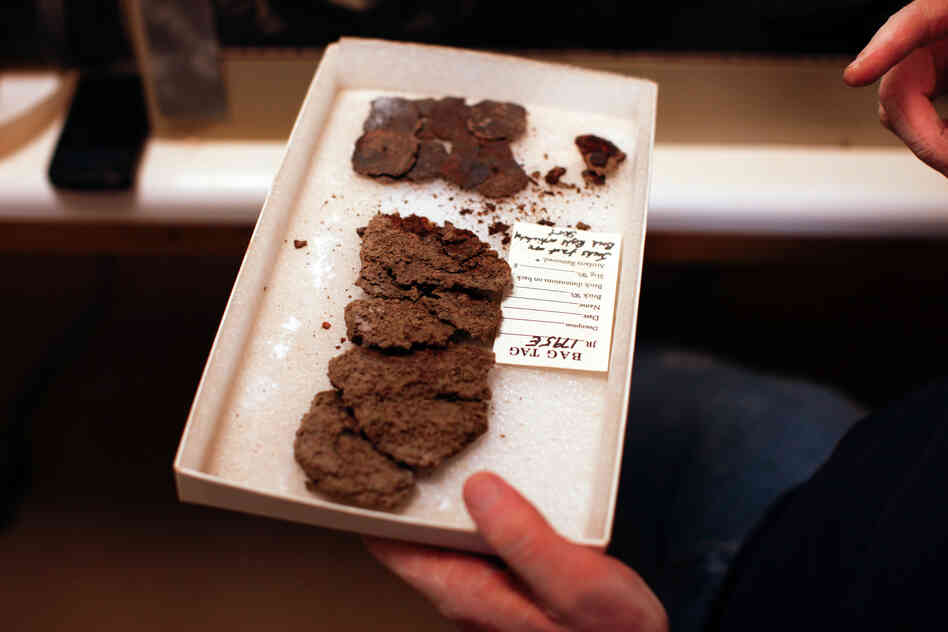 "They call it ""fried chicken."" A lab worker shows a box of old metal that once served as a kind of chain mail for a Jamestown soldier. Each piece is carefully buffed with a wire brush to remove the copious rust."