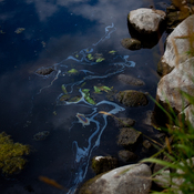 An oil sheen appears along the shore of the Kalamazoo River in August 2012. In July 2010, more than 800,000 gallons of tar sands oil entered Talmadge Creek and flowed into the Kalamazoo River, a Lake Michigan tributary. Heavy rains caused the river to overtop existing dams and carried oil 30 miles downstream.