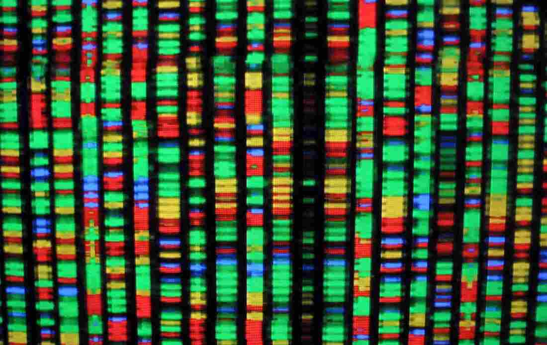 A digital representation of the human genome at the American Museum of Natural History in New York City.