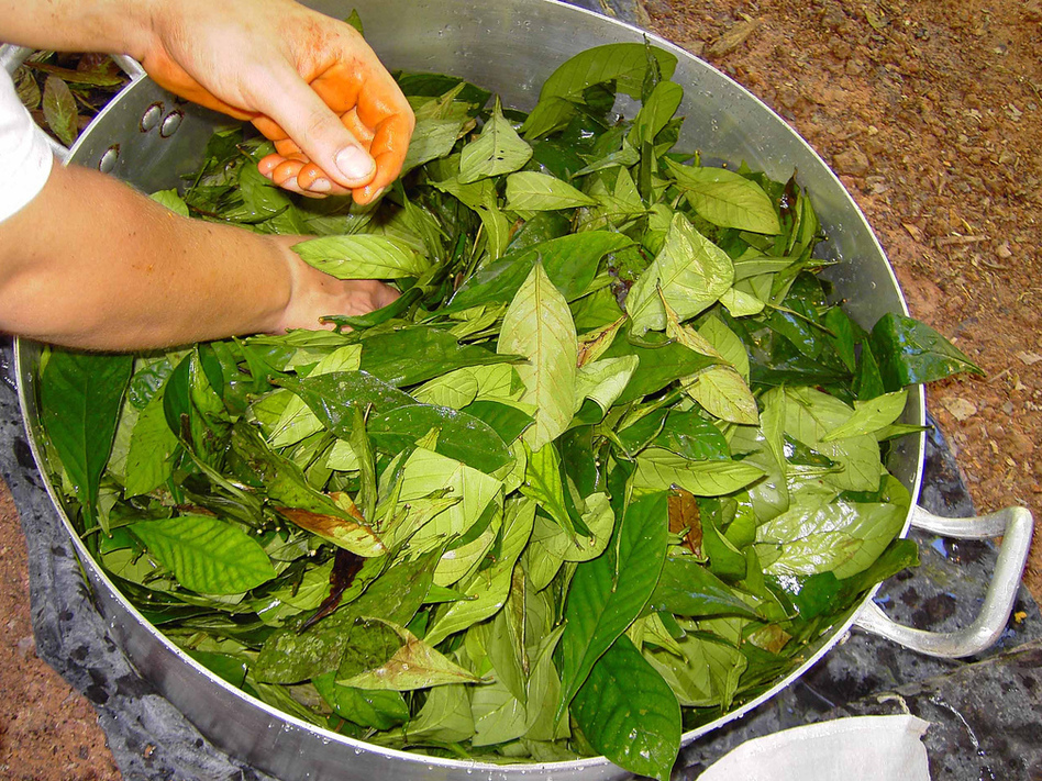 Ayahuasca brew used in South and Central America. (Nha/Flickr)