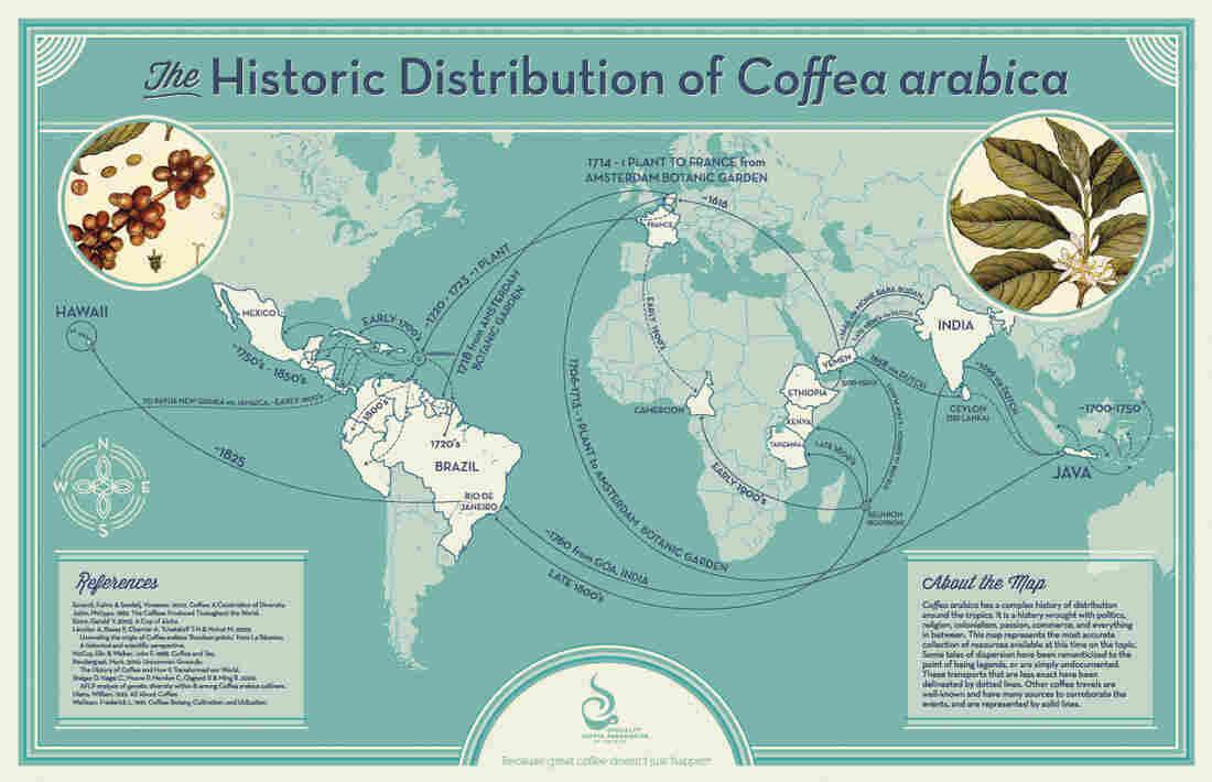 Historic Distribution of Coffea Arabica.