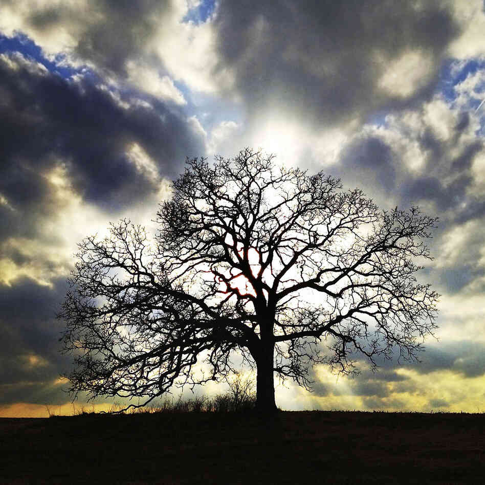 "March 14, 2012. ""An old Bur Oak is silhouetted by the setting sun in the second photo I ever took of it with my iPhone,"" says Hirsch. ""I eventually committed to photographing the tree every day for a year in a project I called That Tree."""