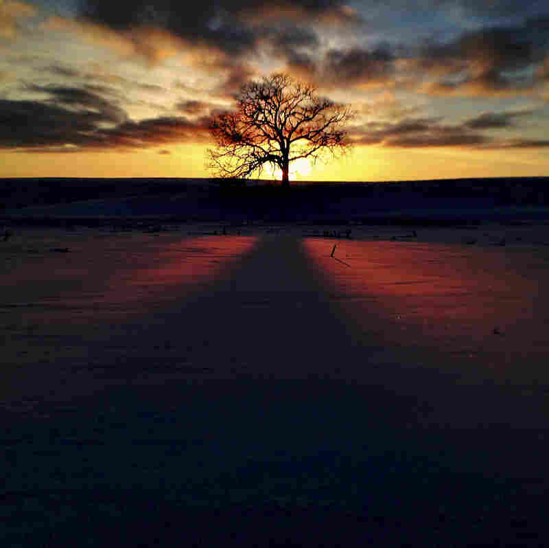 "March 6, 2013. ""I had an incredible day. Seems fitting that it concluded with this glorious red sunset over 'That Tree!' """