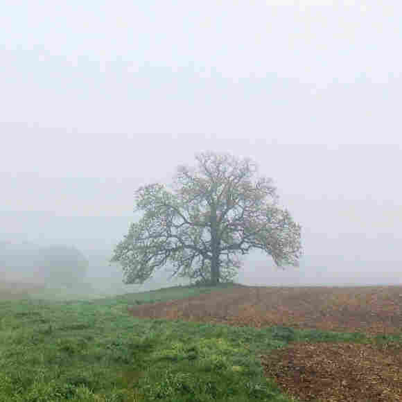 "April 30, 2012. ""That Tree"" is an ancient bur oak growing on the edge of a cornfield near Platteville, Wis."