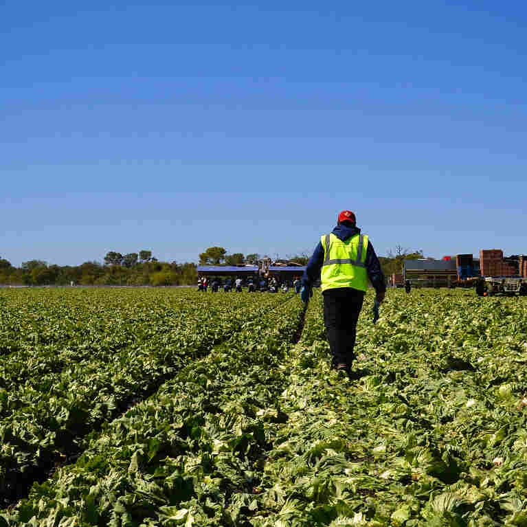 Why An Immigration Deal Won't Solve The Farmworker Shortage