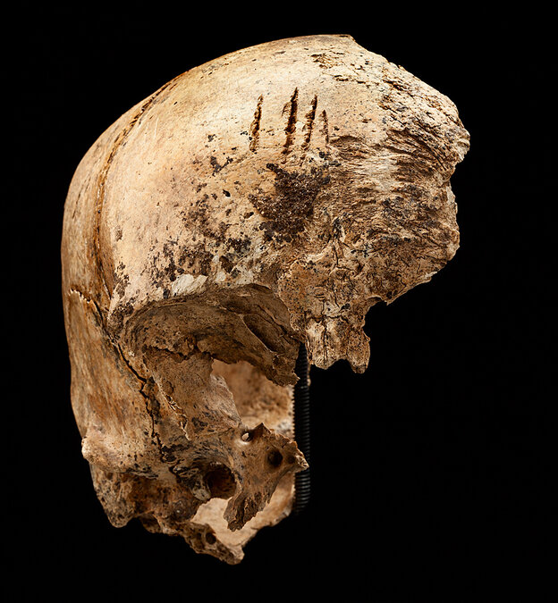 """The four cuts at the top of this skull """"are clear chops to the forehead,"""" says Smith"""