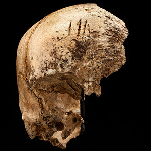 Bones Tell Tale Of Desperation Among The Starving At Jamestown