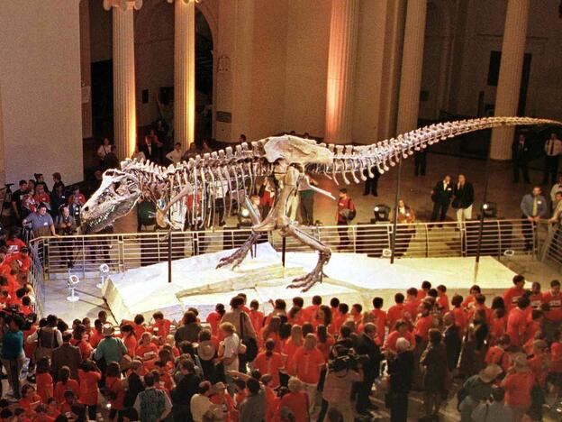 """""""Sue,"""" the <em>Tyranosaurus rex</em> skeleton, is one of the most famous exhibits at Chicago's Field Museum of Natural History"""