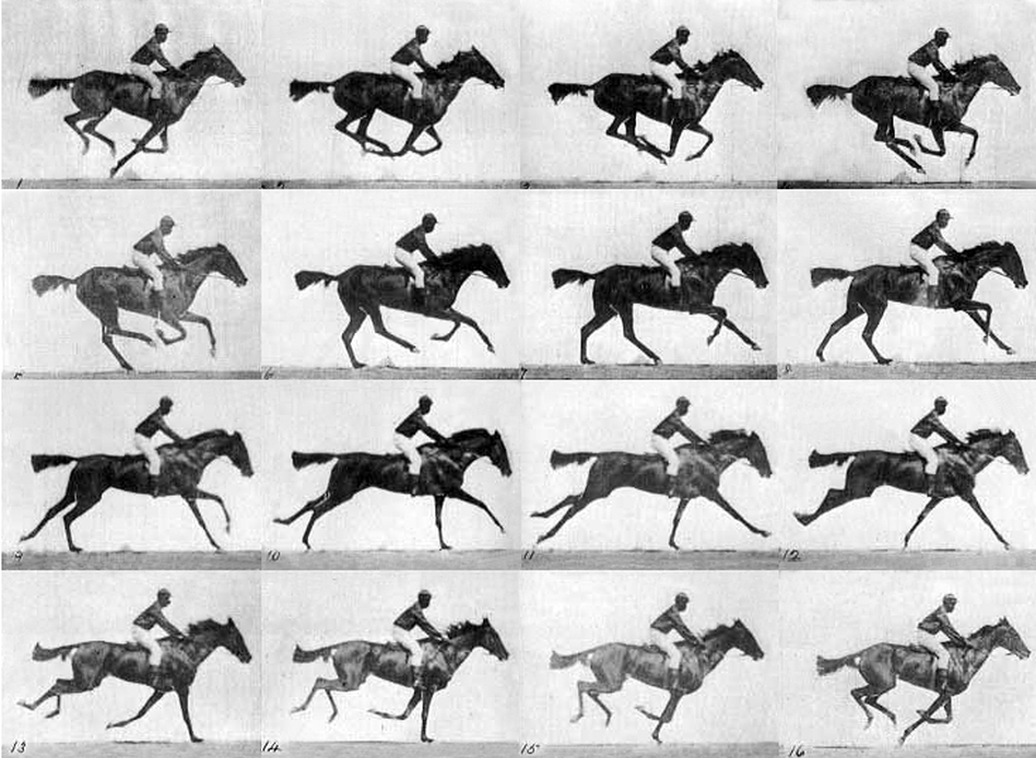 In 1878, landscape photographer Eadweard Muybridge set up a series of still cameras side by side at a racetrack, rigging them to be triggered by threads stretched across the course as the horse passed. Considered an intermediate stage in cinematography, Muybridge's photographic experiment captured the kinetic movement of a horse at full gallop.