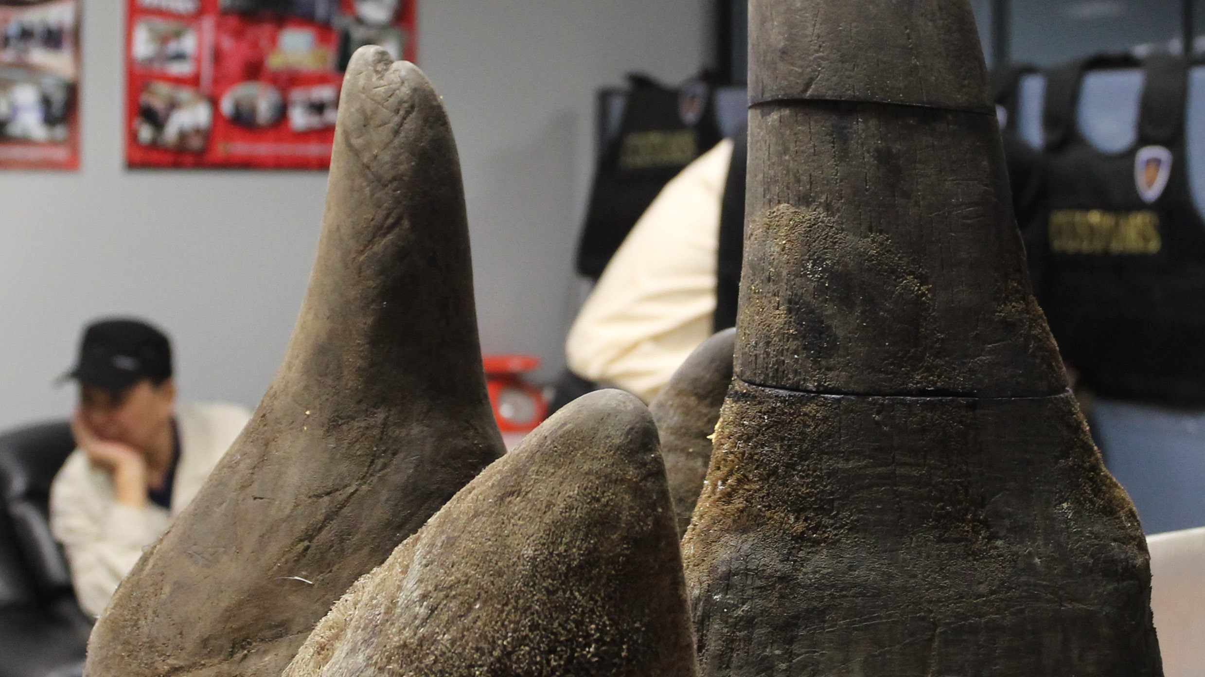 Alleged Vietnamese smuggler Pham Quang Loc, 56, sits behind rhino horns seized at Suvarnabhumi airport in Bangkok on Jan. 6. Rhino horn is seen as a miracle cure-all in Vietnam -- an expensive, medically unproved and illegal product that experts say is devastating the global rhino population.