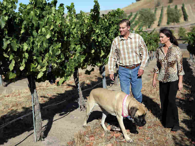 Todd and Tammy Schaefer walk through a neighbor's vineyard with their Old English mastiff, Daisy Ray. Todd was working in a vineyard when he contracted valley fever about 10 years ago and has since struggled with his health.