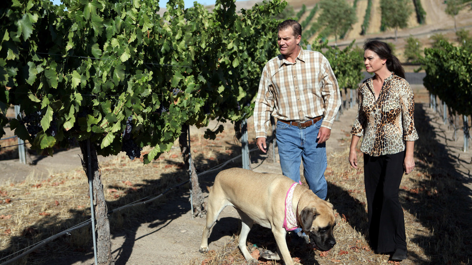 Todd and Tammy Schaefer walk through a neighbor's vineyard with their Old English mastiff, Daisy Ray. Todd was working in a vineyard when he contracted valley fever about 10 years ago and has since struggled with his health. (Reporting on Health Collaborative)