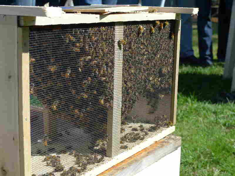 The Plymouth County Beekeepers Association distributed more than 500 crates of honeybees this spring.