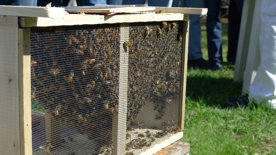 The Plymouth County Beekeepers Association distributed more than 500 crates of honeybees this spring. (Katherine Perry for NPR)