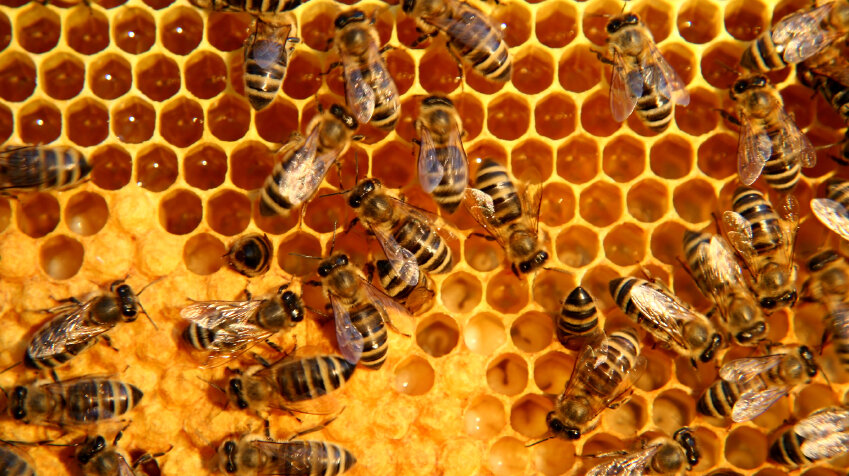What Is It About Bees And Hexagons? : Krulwich Wonders... : NPR