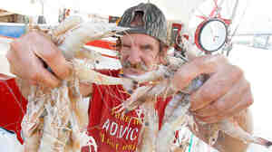 "Louisiana drivers would be able to add the message ""I'm a Cajun"" on their licenses, under a bill making its way through the statehouse. Here, shrimp fisherman Merlin Boudreaux holds up part of his catch in Morgan City, St. Mary Parish, La."