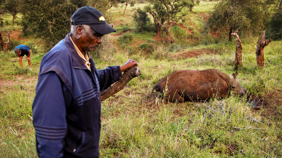 Mzee Kinyanjui is one of the first and longest-serving rangers to work for Lewa Conservancy. Now retired, he is often called upon for advice and guidance by the security department for his forensic skills. (NPR)