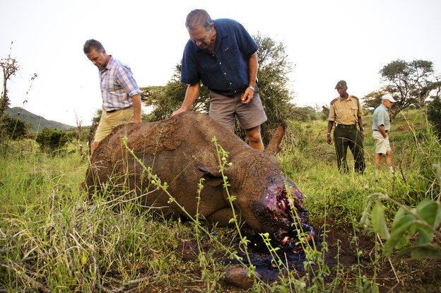 Mike Watson (left), CEO of Kenya's Lewa Conservancy, and conservationist Ian Craig identify the carcass of a 4-year-old black rhino named Arthur, whom poachers had killed the night before. The well-armed, well-informed poachers very likely used night vision goggles and a silencer on an AK-47.
