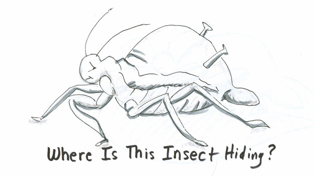 Aphid drawing 1