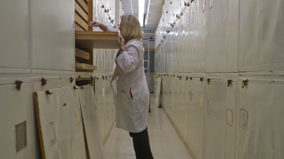 Dove relies heavily on the museum's massive collection of birds to solve her feathered mysteries. The collection contains about 620,000 species from all over the world. The birds are organized alphabetically in drawers that reach floor to ceiling.