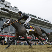 Oxbow, ridden by jockey Gary Stevens, wins the 138th Preakness Stakes horse race at Pimlico Race Course on Saturday in Baltimore.