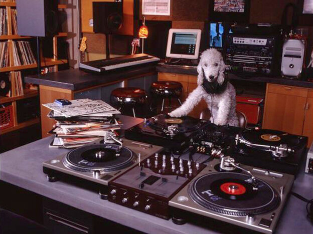 Check it out. It's a dog DJ!