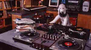 Check it out. It's a dog DJ!