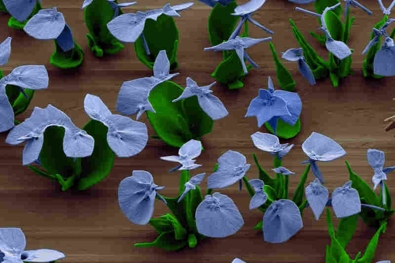 Noorduin creates ripples in the petals by sending pulses of carbon dioxide through the solution.