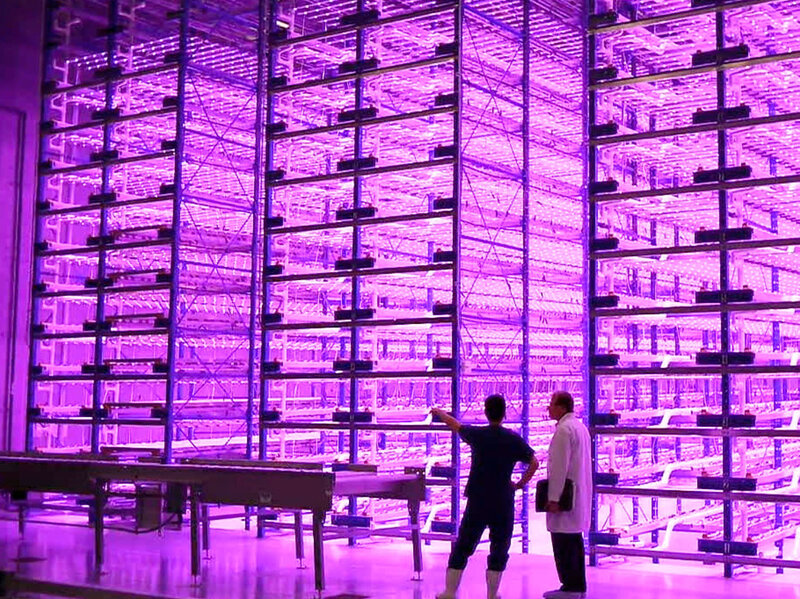 Vertical Pinkhouses The Future Of Urban Farming