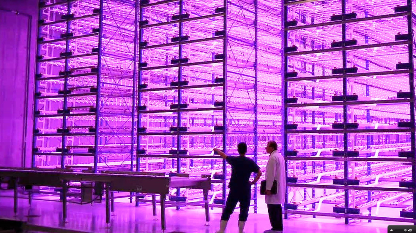 Vertical Pinkhouses The Future Of Urban Farming The