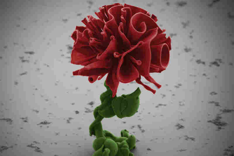 Each rose sculpture is about half the thickness of a dollar bill. The only way to see the sculptures is with a microscope.
