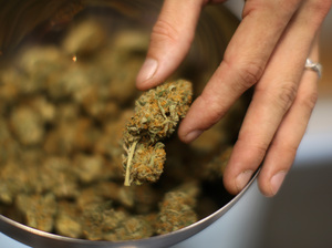An employee handles marijuana at Perennial Holistic Wellness Center, a medical marijuana dispensary, in Los Angeles.