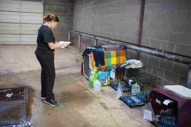Jessica Manzer, a veterinary technician, checks on the cats at a temporary animal shelter set up at the Cleveland County Fairgrounds in Norman, Okla.