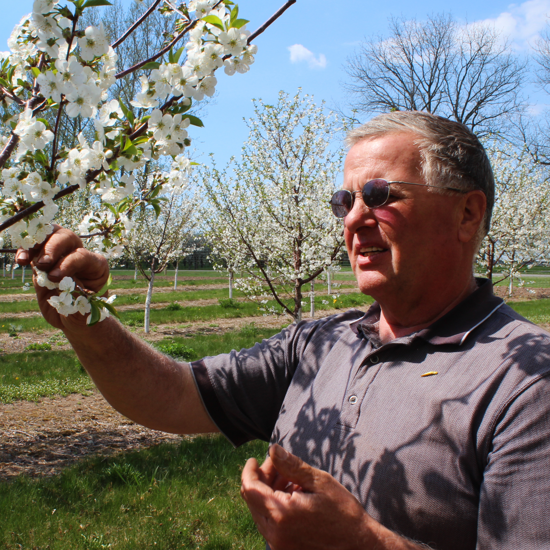 Mike Van Agtmael grows tart cherries on his farm near Hart, Mich.