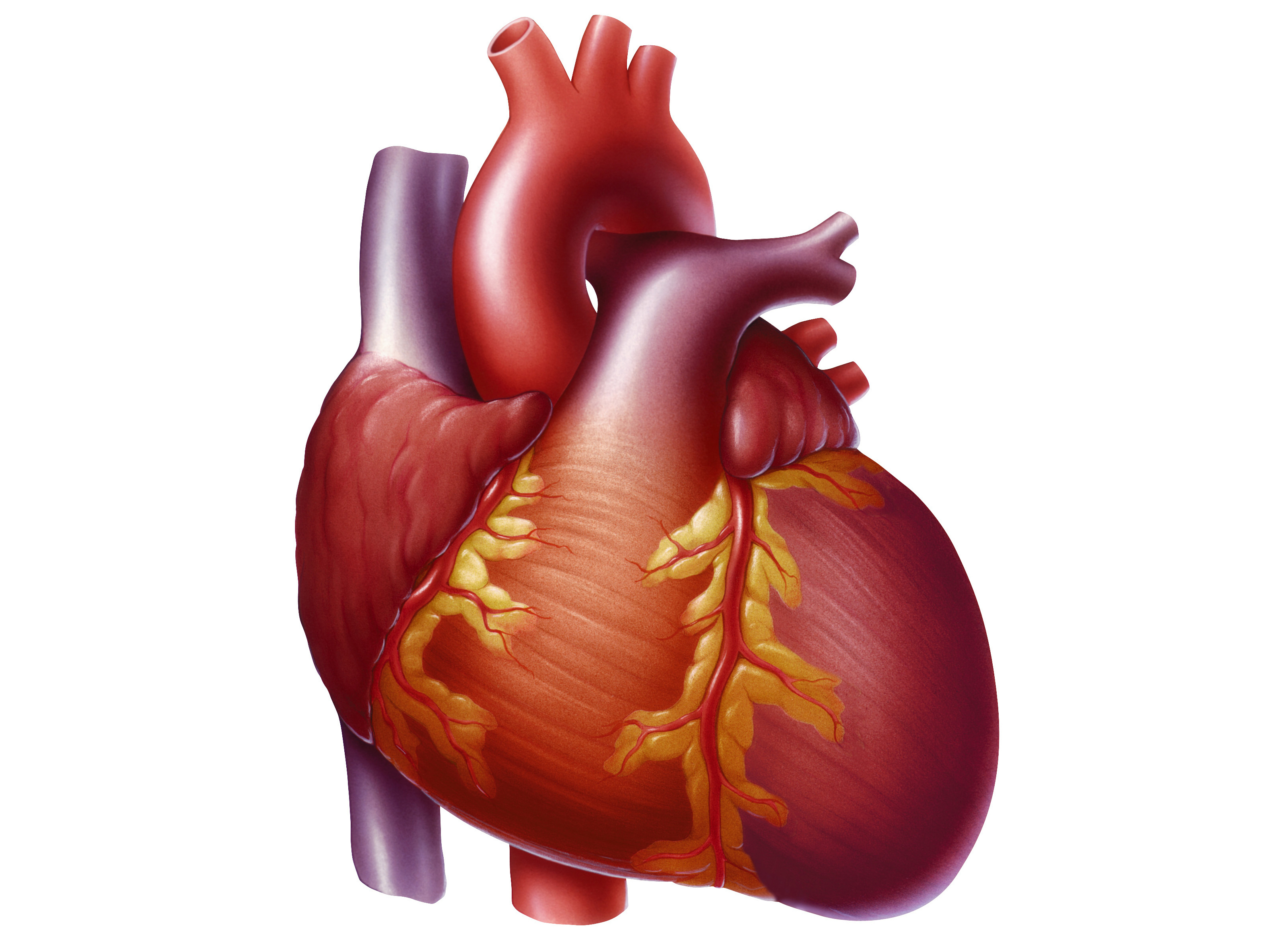 Image Of Heart Medical