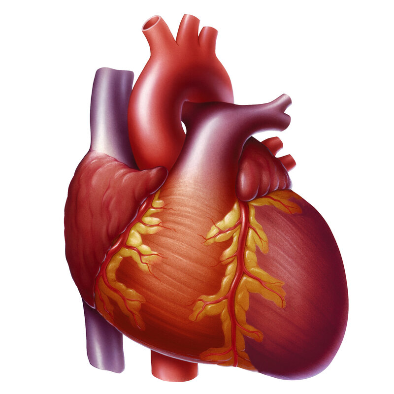 Exercise To Renew A Middle Aged Heart Shots Health News Npr