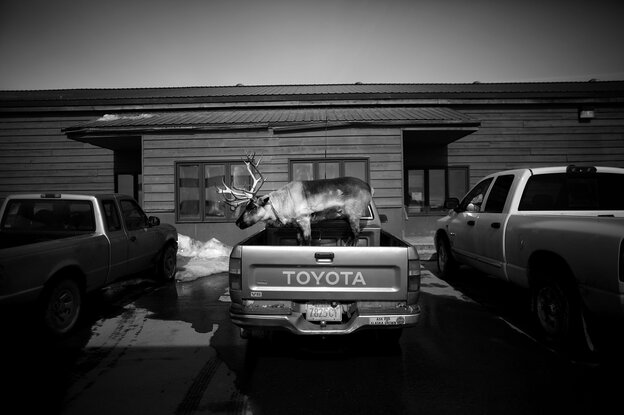 """Velvet Eyes"" — a pet reindeer belonging to Carl Emmons — stands in the back of a pickup truck outside a market and gas station in Nome, Alaska."